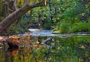 Bidwell Park creek